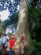 Tree Talk